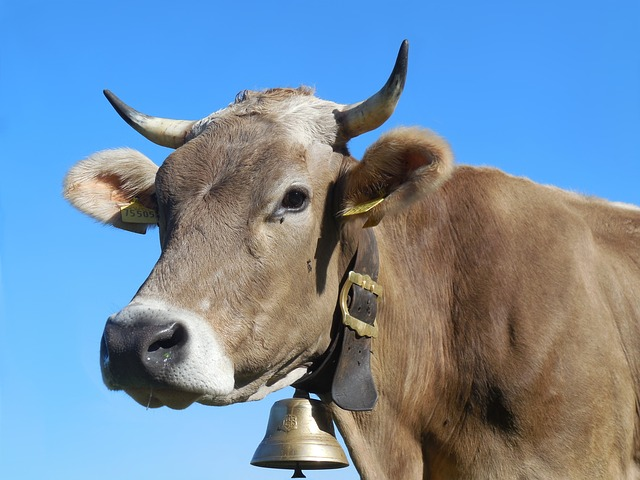 karmienie naturalne mleko